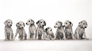 best pets 1920x1080 wallpaper by josephina winsett