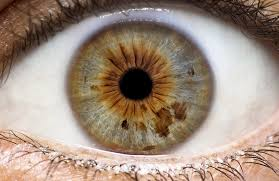 Iridology Its All In The Eyes Centre Of Excellence