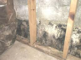 removing mold from basement walls mold in basements removing mold basement walls