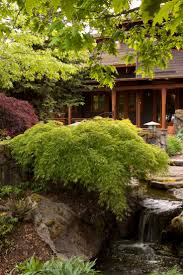 Monrovia's Waterfall Japanese Maple details and information. Learn more  about Monrovia plants and best practices for best possible plant  performance.