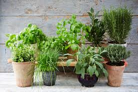 how to grow a herb garden. The Ultimate Guide To Growing Herbs How Grow A Herb Garden 0