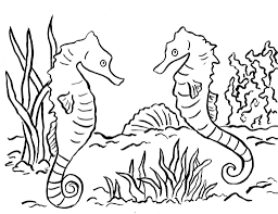 Seahorse Coloring Page Samantha Bell