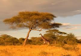 Природа растения и животные Африки