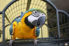 parrots for kids.  Kids Close Up Of A Macaw  Blue U0026 Gold For Parrots Kids I