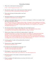 The Light Reactions Worksheet Photosynthesis Worksheet
