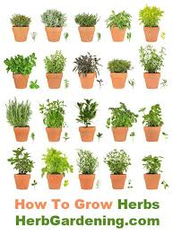 herb gardens how to grow herbs