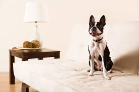 pets furniture. Pet-Friendly Furniture And Other Design Tips For Animal Lovers Pets