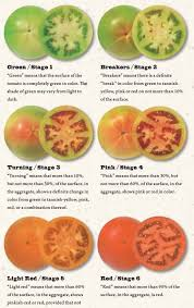 Tomato Color Chart Tomatoes Ripening Chart Cool How To Ripen Tomatoes