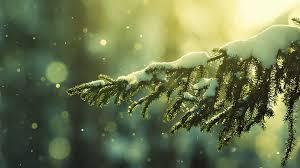 christmas wallpaper tumblr snow. Wonderful Christmas In Christmas Wallpaper Tumblr Snow