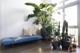 Plant Interior Design Cool Decorating