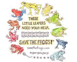 frog art contest winners frogs artist