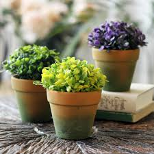 small plants for office. Similiar Office Desk Plants Keywords   Greenvirals Style With Small For S