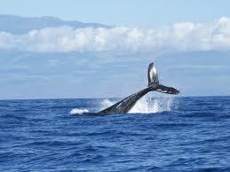 Giornata Mondiale degli Oceani 2021 - inNaturale