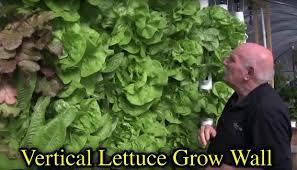 should i a vertical garden kit