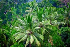 Image result for indonesia rainforest