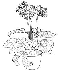 Small Picture Daisy Flower in Pottery Coloring Page Daisy Flower in Pottery