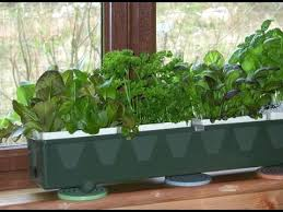 how to hydroponic herb gardening