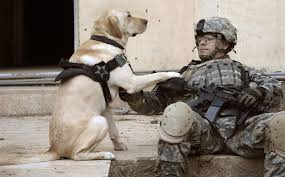 Image result for people that help dogs