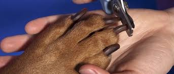 to trim your dog s nails