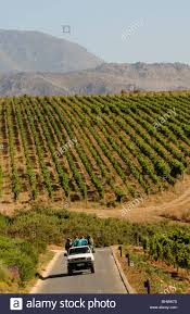 Toyota pickup truck transporting vineyard workers on the ...