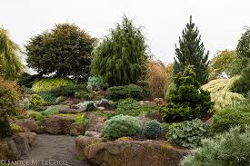 Small Picture evergreen shrub form and foliage