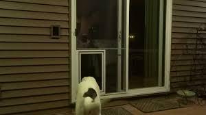 security boss pet screen door extra large sophie 80 pound labrador retriever you