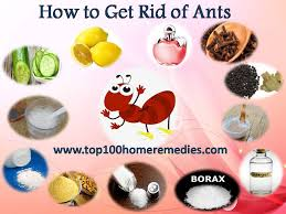 getting rid of ants can lead to a huge ant problem if we don t follow the effective home remes for ants to kill ants and for exterminating ants using