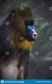 Madril Hair Design A Bright Yellow And Blue Muzzle Of A Monkey Madril With Lush
