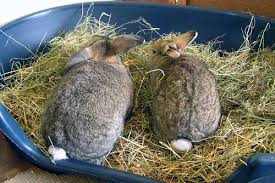 hay the grass roots rabbit welfare