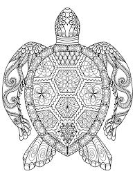 Small Picture Sea turtle coloring pages for adults ColoringStar