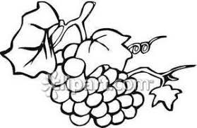 grapes clipart black and white. black and white grapes on a vine - royalty free clipart picture