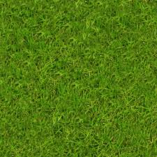 grass - HD Wallpapers
