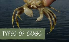 Crab Species Chart Crab Lovers Guide To Types Of Crabs Earths Friends