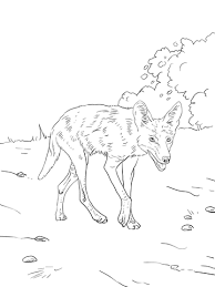 Small Picture Brush Wolf or Coyote coloring page Free Printable Coloring Pages