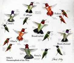 Hummingbird Bird T Shirts On For Men Women And Children Who