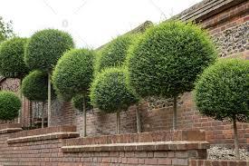 garden wall ideas stock photos offset