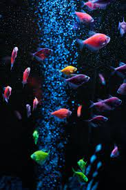 Fish Wallpapers: Free HD Download [500+ ...