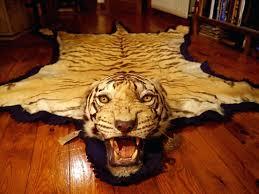tiger skin rug ref antique story