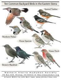Bird Watcheru0027s Digest Home » Bird Watcheru0027s DigestBackyard Bird Watch