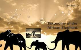 Taxonomy Of The African Elephant By Bolu Ogunniyi On Prezi