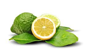 Výsledok vyhľadávania obrázkov pre dopyt bergamot