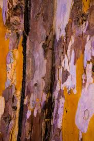 tree rock wood texture leaf flower trunk wall formation color autumn material painting art geology modern
