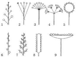 Контрольная работа по биологии на тему Цветок и плод  hello html 53a74390 png