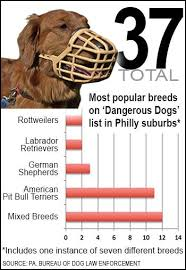 there are a dozen mixed breeds many of which include a pitbull mix and seven other breeds including a mastiff goldendoodle and rhodesian ridgeback