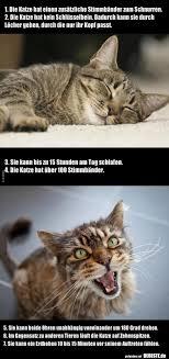 Die Katze Hat Einen Zusätzliche Stimmbänder Zum Lustige Bilder