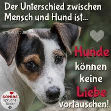 Sonias Sprüche Bilder Hunde Können Keine Liebe Vortäuschen
