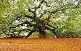 Kết quả hình ảnh cho cây đẹp nhất