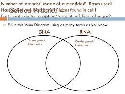 Venn Diagram Comparing Dna And Rna Venn Diagram Of Dna And Rna Magdalene Project Org
