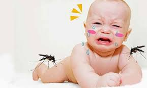 Muỗi đốt