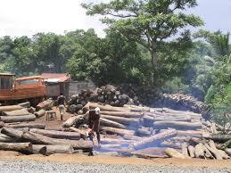 Illegal Logging In Madagascar Wikipedia